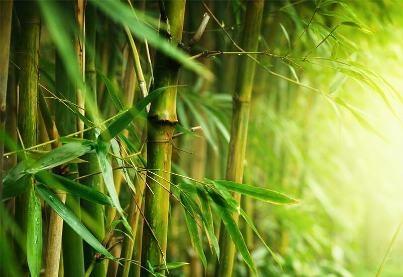 Idealna kombinacija bambusa i mikrovlakana za udobnost i toplinu tokom cijele godine